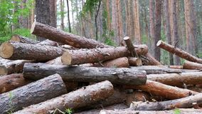 Felled Logs Falling on a Tree Trunks in the Forest. Folding logs felled into a heap. The felled trees fall on a pile of firewood. Cut logs are stacked in a stock footage