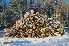 Felled logs in a forest Stock Image