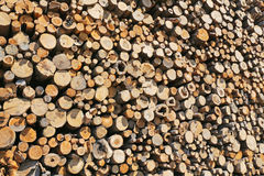 Felled logs Stock Images