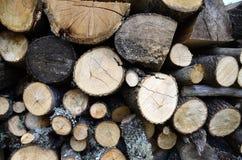 Felled logs Royalty Free Stock Photo