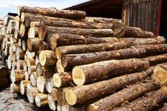 Felled lumber Stock Image