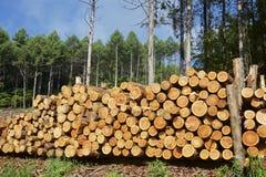 Felled lumber Royalty Free Stock Photo
