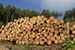 Felled lumber Stock Photo