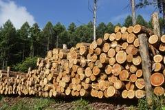 Felled lumber Royalty Free Stock Photos