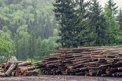 Felled pine logs piled firebreak Stock Images