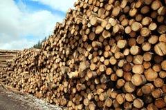 Felled pine trees background Stock Photos