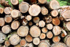 Felled and Stacked Pine Logs Stock Image