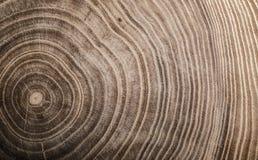 Felled stomp van boom - sectie van de boomstam met jaarringen royalty-vrije stock afbeelding