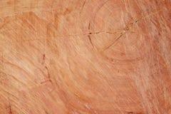 Felled stomp van boom - sectie van de boomstam met jaarringen Royalty-vrije Stock Afbeeldingen