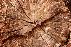 Felled stomp van eiken boom - sectie van de boomstam met jaarringen stock foto's