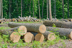 Felled timber Royalty Free Stock Images