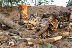 Felled timber Stock Photography