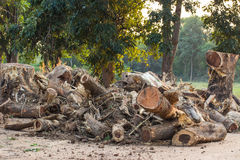 Felled timber Stock Image