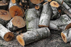 Felled tree. Newly felled birch ends up as pile of logs. Firewood maybe Stock Photos