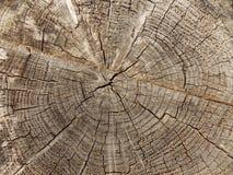 Free Felled Tree Stock Photos - 55391783