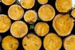 Felled tree Royalty Free Stock Photography