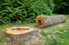 Felled Tree Stock Photography
