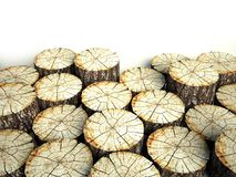 Felled tree stumps, background and copyspace Stock Image