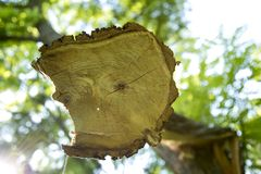 The felled tree. Tree trunk. Circles on the tree trunk Stock Photo