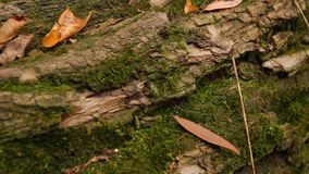 Felled tree trunk stock video footage