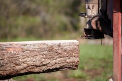 Felled tree trunk being cut for lumber. Close up on a felled tree trunk being cut for lumber in a side view showing the flattened surface after milling a plank Royalty Free Stock Photos