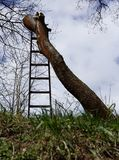 Felled tree trunk without branches standing with ladder royalty free stock photography