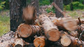 Felled Tree Trunks in the Forest. Folding logs felled into a heap. The felled trees fall on a pile of firewood. Cut logs are stacked in a forest. Still summer stock footage