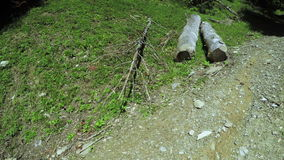 Felled tree trunks on ground. On mountain path are tree trunks sawn stock video