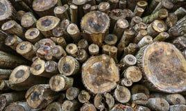 Felled tree trunks Stock Photos