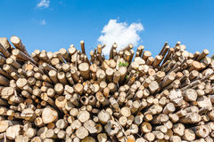 Felled tree trunks piled on either side of agricultural road Royalty Free Stock Photo