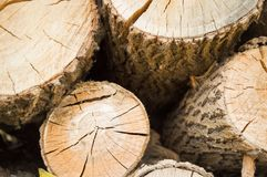 Felled tree trunks, the view on the cut of the ring.  Stock Images