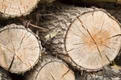 Felled tree trunks, the view on the cut of the ring.  Stock Image