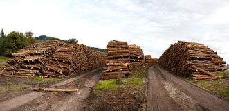 Felled trees Stock Photography