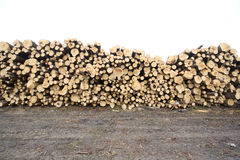 Felled trees Royalty Free Stock Photography