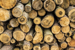 Felled trees Stock Photo