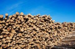 Felled trees birches Royalty Free Stock Photos