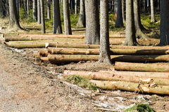 Felling timber Royalty Free Stock Photography
