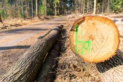 Felled trees in a forest. Felled trees in a forest in Germany Stock Photography