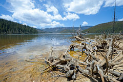 Felled trees in front of National Lake Pudacuo. In China Royalty Free Stock Images