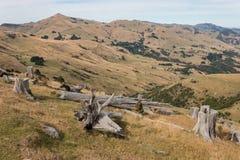 Felled trees on grassy slopes Stock Photos