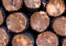 Felled trees with knots. Closeup background Stock Images