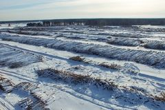 The felled trees lie under the open sky. Deforestation in Russia. Destruction of forests in Siberia. Harvesting of wood stock images