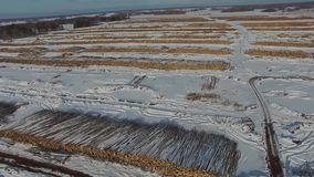 The felled trees lie under the open sky. Deforestation in Russia. Destruction of forests in Siberia. Harvesting of wood