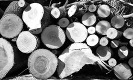 Felled trees Royalty Free Stock Images