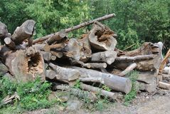 Felled trees Stock Image