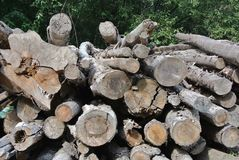 Felled trees Stock Images
