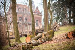 Felled trees in the park Royalty Free Stock Photos