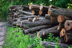 Felled trees Royalty Free Stock Image