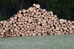 Felled trees, ready for transportation Stock Photo