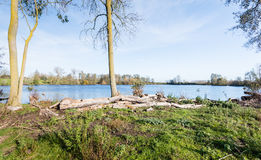 Felled trees on the shore of a lake Stock Image